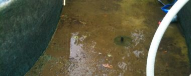 Pond and Filtration cleaning and maintenance
